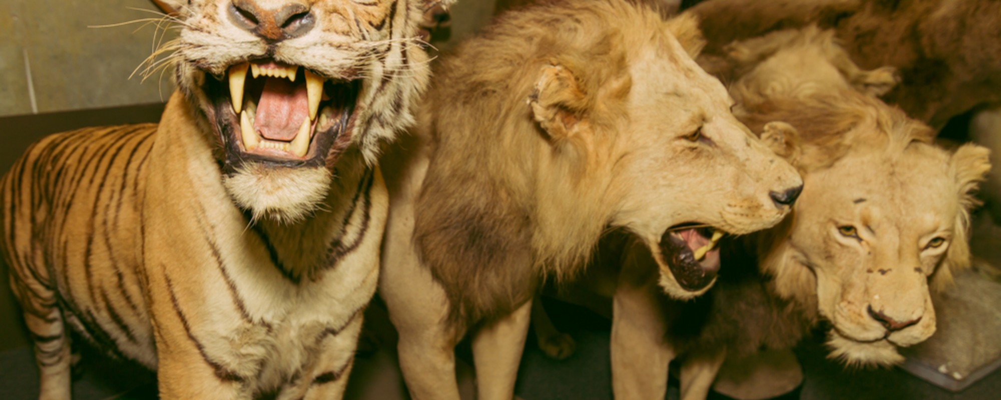 The Ferocious Dead Animals Inside Hollywood's Favorite Taxidermy Shop