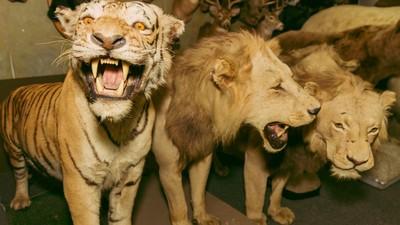 De woeste dode beesten in Hollywoods favoriete winkel vol opgezette dieren
