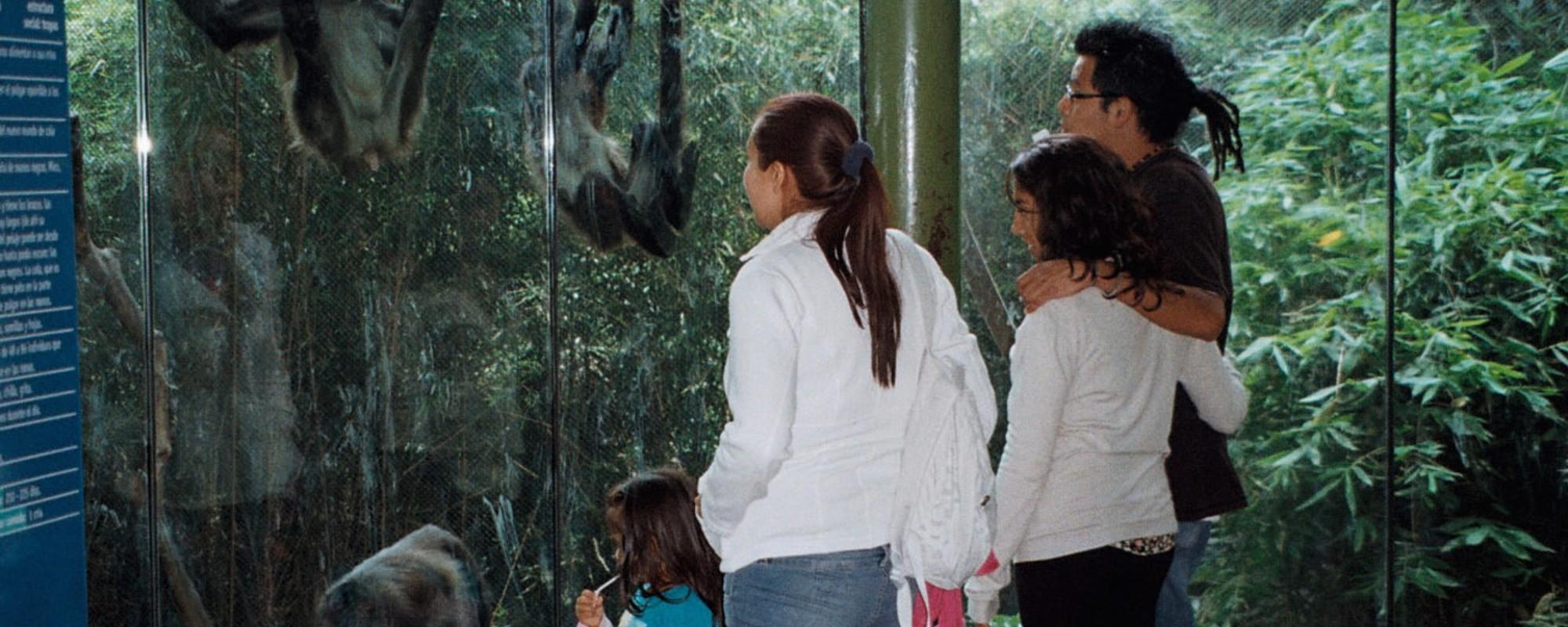 ¿El zoológico de Chapultepec debería cerrar permanentemente?