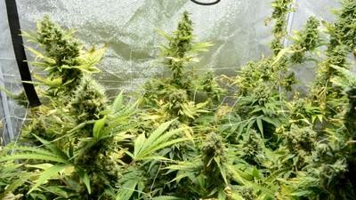 Wie ein HIV-Patient sich mit Cannabis selbst therapiert