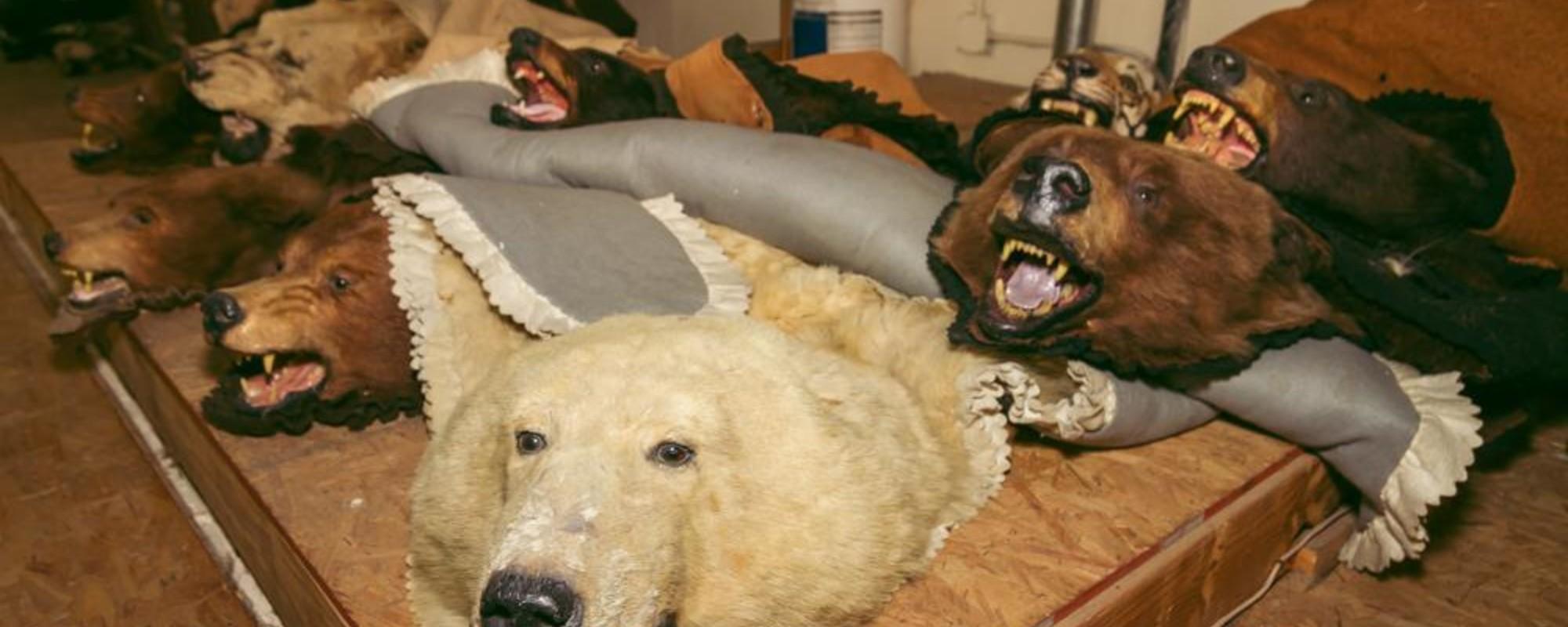 Fotografii cu animalele moarte din magazinul preferat al vedetelor de la Hollywood