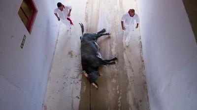 Como siempre, la tortura animal cerró los Sanfermines