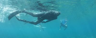 Το Νησί που Κολυμπάς Δίπλα στα Σαγόνια του Καρχαρία