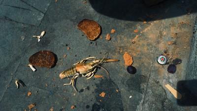 Fotografii, care ne definesc, cu mâncarea pe care o aruncăm pe jos aiurea în România