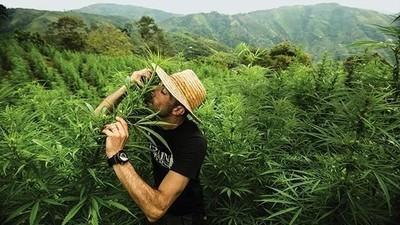 Alergičtí můžete být na cokoliv, i na marihuanu