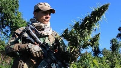 Sur le front de la guerre contre le cannabis au Paraguay