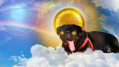 Traumatische Geschichten vom Tod heißgeliebter Haustiere unserer Kindheit