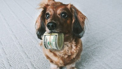 Why Rich People Set Up Trust Funds for Their Pets
