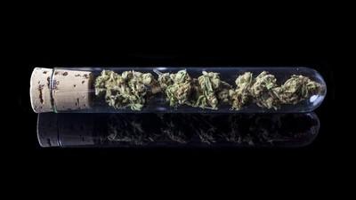 How Legalizing Marijuana Might Stave Off 'Spice' Epidemics