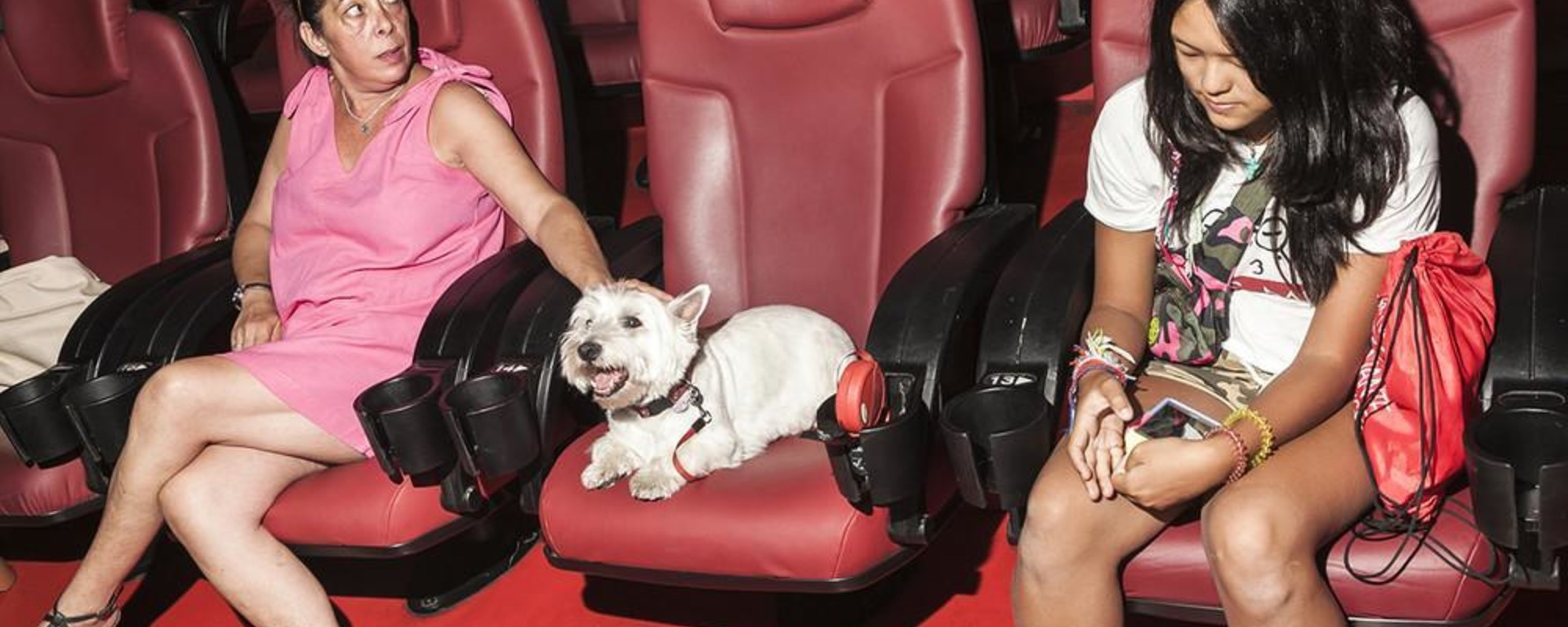Dogs Go To the Cinema
