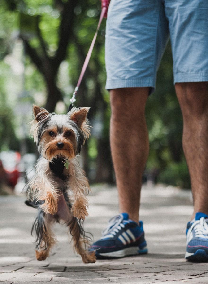 Fotos de perritos de la Condesa