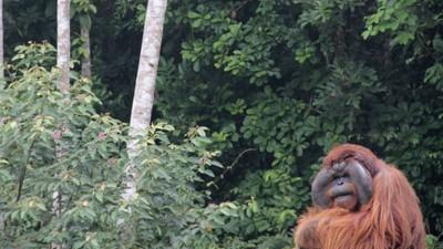 Los huesos de Borneo: expedición a los mares del sur (Parte 1)