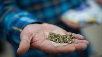 Ya llegó la venta de marihuana recreativa en las farmacias de Uruguay