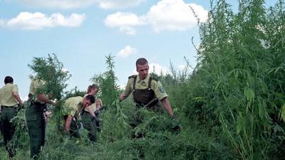 Nordrhein-Westfalen jagt Cannabis-Gärtner mit Hubschraubern