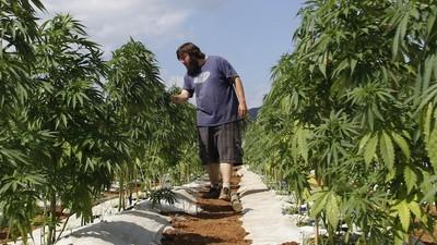 La DEA permet aux chercheurs de faire pousser leur propre weed