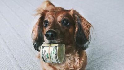 Zašto bogataši osnivaju investicione fondove za svoje kućne ljubimce