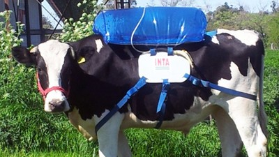 Cattle Farmers Are Fighting Climate Change with Fart-Collecting Backpacks for Cows