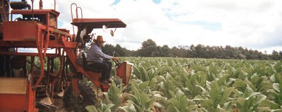 Family-Friendly Photos of Life on a Tobacco Farm