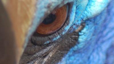 Warum die tödlichsten Vögel der Welt weiter in Häuser von Menschen einbrechen