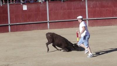 Vídeo: la muerte de este becerro ha indignado a los animalistas en España