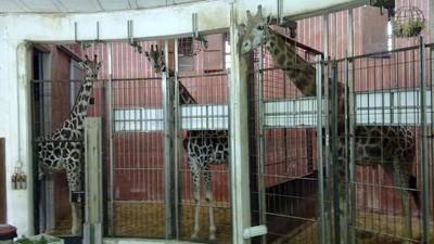 Motivos por los que el Zoo de Barcelona debería cerrar