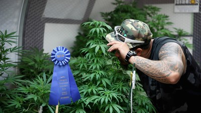 Check Out Some Prize-Winning Weed Plants at the Oregon State Fair