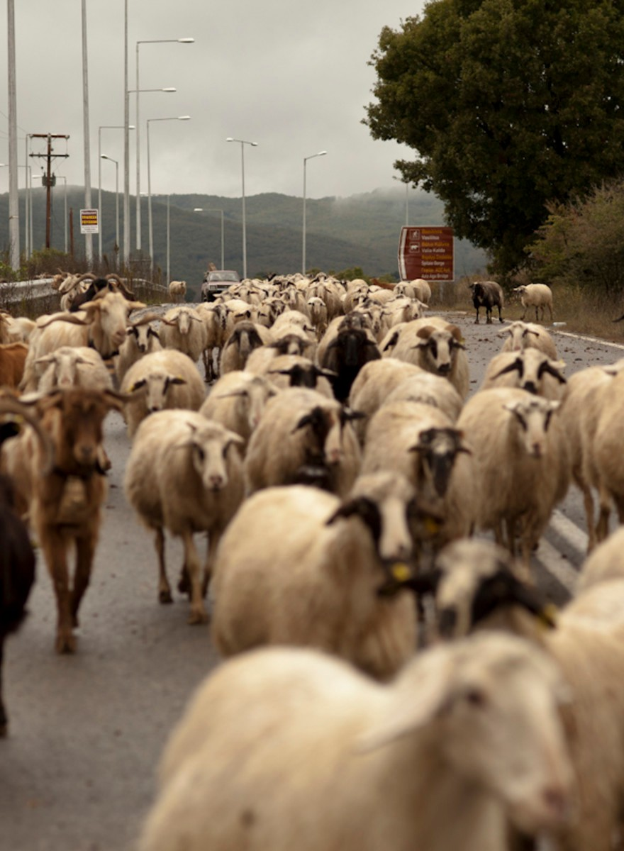 Ultimii ciobani adevărați din România