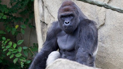 A Pollster Explains What He Learns from Asking Voters About Harambe and Deez Nuts