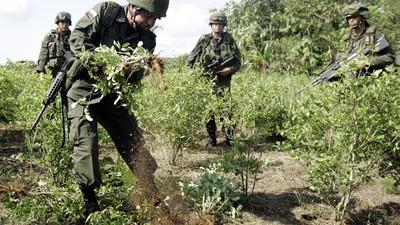 La industria de la cocaína tiene muchos intereses en el acuerdo de paz en Colombia