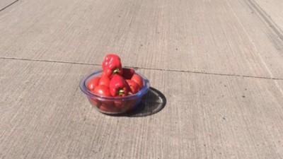 Möchtegern-MacGyver baut aus Paprika und Tomaten ein Warndreieck