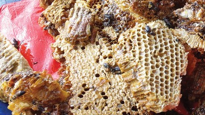 Hunting for Hallucinogenic Honey in Nepal