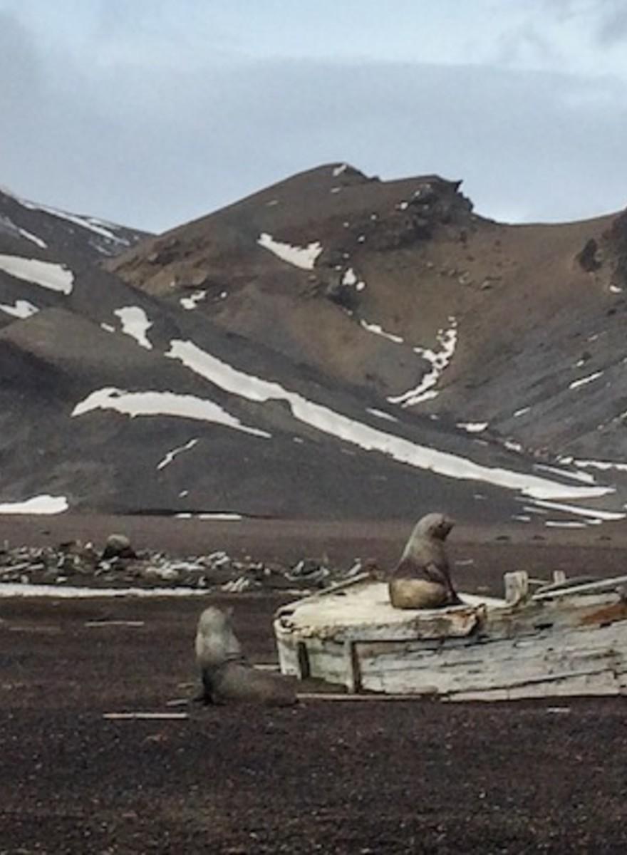 Foto bellissime che mostrano il cambiamento climatico in Antartide