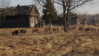 En imágenes: la vida salvaje ha vuelto a Chernobyl de forma increíble