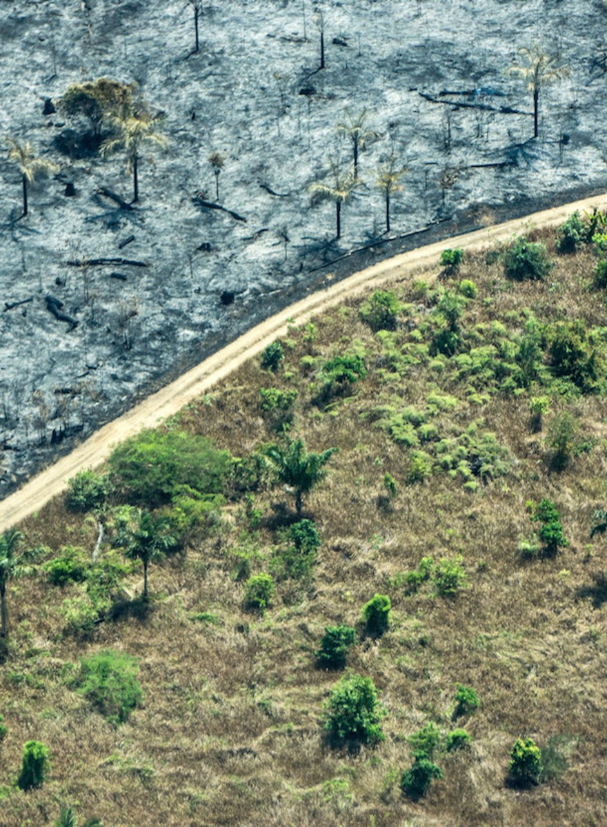 The Earth Has Lost a Tenth of Its Wilderness Since the 1990s