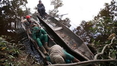 Inside the Illicit Pangolin Poaching Trade