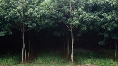 Jornalistas do Camboja estão morrendo tentando salvar as florestas do país