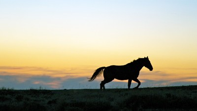 The Controversial Plan to Kill 45,000 Wild Horses to Make Room for Cattle Farming