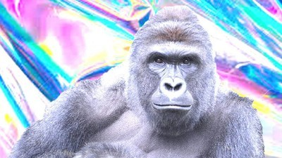 Why a Music Festival Let the World Believe a Harambe Hologram Was on Its Lineup