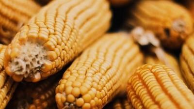 A Bayer comprou a Monsanto e estas são as coisas com que temos de nos preocupar