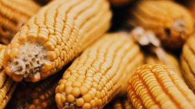 Bayer acaba de comprar Monsanto y esto es por lo que nos tendríamos que preocupar
