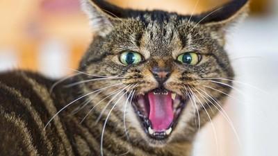 ¿Por qué debemos impedir que los gatos salgan al exterior?