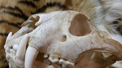 La deep web rechaza a los traficantes ilegales de vida silvestre