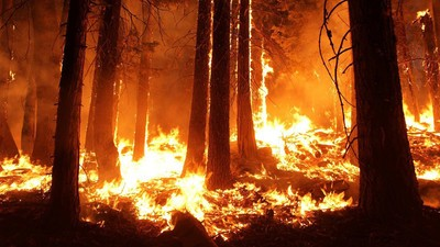Drones Could Heal Scorched Land After Wildfires