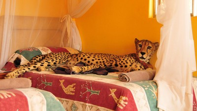 Rich People Are Obsessed with Owning Exotic Animals