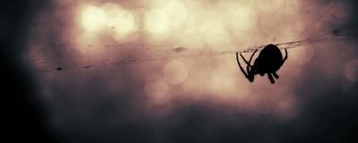 Wir sind dem Mythos von Spinneneiern im menschlichen Körper nachgegangen