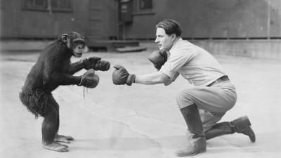 Pourquoi un combat contre un singe serait à l'origine de la Prohibition