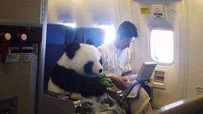 Damit wir das ein für alle Mal geklärt hätten: Es flog kein Panda in der Business Class
