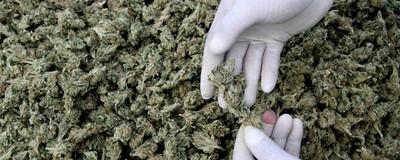 Apologia da Marijuana
