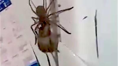 10.000.000 mal wurde das Video dieser Spinne schon angesehen