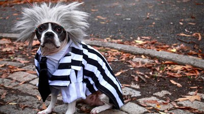 Photos from the Halloween Dog Parade, a Stunning Parade of Dogs